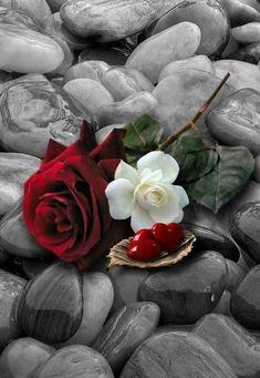 Splash of Color Beautiful Rose Flowers, Love Rose, Beautiful Flowers, Beautiful Butterflies, Heart Wallpaper, Flower Wallpaper, Love Images, Beautiful Images, Color Splash