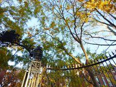Early Morning   #Harvard #CambMA #CambridgeMA