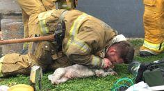 Brandweerman redt bewusteloos hondje met mond-op-snuitbeademing