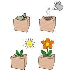 Ecocube Aloe Vera im Holzwürfel - Bild 2