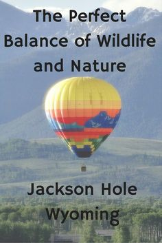 Jackson Hole, WY- a Perfect Balance of Wildlife and Nature