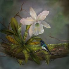 Tropical Envy is an acrylic painting by artist Gaby Hunter