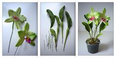 Cattleya orchid - orchidea - https://www.facebook.com/Csodavirag