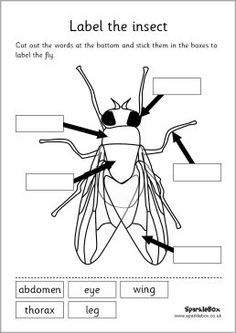 MFW:K - Insect unit - Label the insect set worksheet