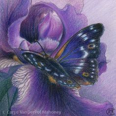 "PURPLE in ""Camouflage (Secondary Colors)"" Series by CaryeVDPMahoney • #art #butterfly #iris #nature #flower"