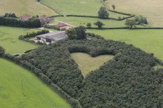 Over 6000 oak trees create a heart-shaped meadow, created by a farmer as a tribute to his late wife, can be seen from the air near Wickwar, South Gloucestershire, England. The point of the heart points towards Wotton Hill, where his wife was born.