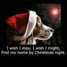15 Most Beautiful Christmas Dog Photos Merry Christmas, Christmas Night, Christmas Dog, Christmas Wishes, Christmas Prayer, Christmas Videos, Christmas Feeling, Xmas, Christmas Scenes