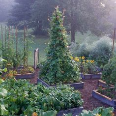 Benefit:+Make+Your+Garden+More+Attractive+with+Raised+Gardens