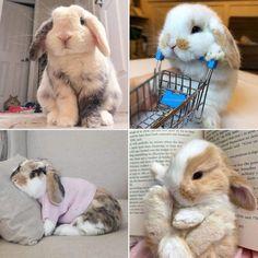 Rabbit, Animals, Bunny, Rabbits, Animales, Animaux, Bunnies, Animal, Animais
