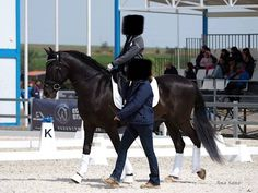 PRE Castrado bien domado Equestrian, Horses, Animals, Horses For Sale, Animales, Animaux, Horseback Riding, Animal, Animais
