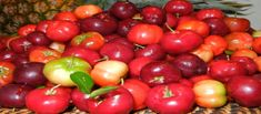 "Acerola Cherry, Has One of The Highest Natural ""Vitamin C"" Sources Of Any Fruit! Jamaican Dishes, Jamaican Recipes, Different Vegetables, Fresh Fruits And Vegetables, Veggies, Health Benefits Of Cherries, Potato Pudding, Whole Food Vitamins, Trini Food"
