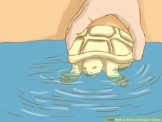 How to Bathe a Russian Tortoise: 10 Steps (with Pictures)