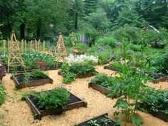 Image detail for -Raised Vegetable Garden Bed Kit - No Tool Assembly - Cedar Wood
