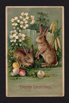 Easter Greetings Postcard Rabbits Colored Eggs Flowers Fence 1908 | eBay