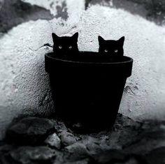 Chats-pot