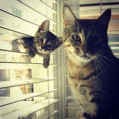 #Cats #Cat #Kittens #Kitten #Kitty #Pets #Pet #Meow #Moe #CuteCats #CuteCat #CuteKittens #CuteKitten #MeowMoe Two of a kind, adorable! ... https://www.meowmoe.com/33920/