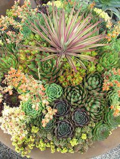Amazing succulent container garden.