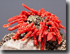 Natural Red Coral Branches