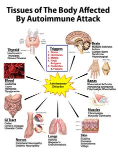 "What is autoimmune disease ? Tissues of the Body Affected by Autoimmune Attack ""Many triggers can cause autoimmune disease and many body tissues can be affected."" ""Missing from list: cardiac autonomic neuropathy."""