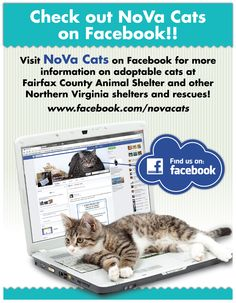 My Facebook page promoting adoptable adult cats in the Northern Virginia area, and its environs.