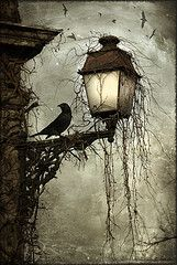 Crow on lamp post at night Dark creepy old London gothic feel. Love the hanging moss and carrion's circling in the back Arte Obscura, Ouvrages D'art, Pics Art, Cool Art, Art Photography, Macabre Photography, Illustration Art, Design Illustrations, Drawings