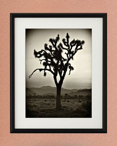 Wild West Photography! Vintage-style Joshua Tree at Sunset, California Art, Wall Art Print, Cowboy Art, Room Decor, Dorm Decor, Large Print    Fine art photographic print in the 'WILD WEST - Joshua Tree' series, taken by me (Toula Mavridou-Messer) in the Wild West (California, Nevada, Utah, Arizona, Colorado, New Mexico), USA.    MEDIUM: Fine art photo print signed by the artist*   SIZE: 5 x7, 8x10, 11x14, 16x20 or 20x30 inches** (May have a small white border depending on size of print…