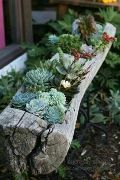 succulent in a log