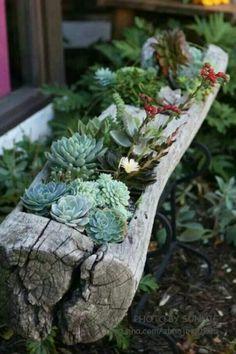 succulent in a log