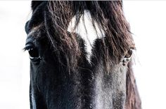 """703 Likes, 2 Comments - Equine Photography WTDs (@_equinewtds) on Instagram: """"Theme: Stars - Round 2 winner: @somethingfromthehart ❤️❤️ - Next Theme: Paints/Pintos"""""""