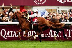 【競馬】最強馬オルフェーヴル。有馬記念は名馬への「最終関門」|集英社のスポーツ総合雑誌 スポルティーバ 公式サイト web Sportiva|競馬&格闘技