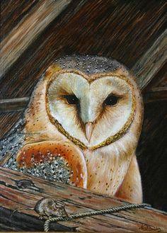 Nico Bulder - Barn Owl