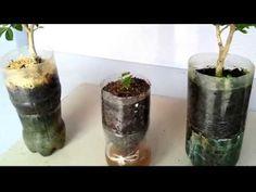 Aprenda a fazer mudas frutíferas por estaquia ( galho ) - YouTube