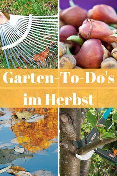 Die 211 Besten Bilder Von Blumen Und Pflanzen Fruit Veg Balcony