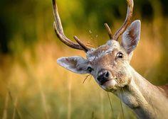 Deer's Vision | Deer Hunting Guide: Can These Animals See Orange Vests?