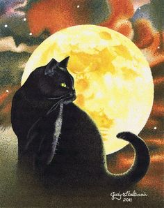 Black cat in the moonlight