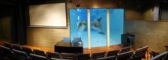Kokoustamaan delfiinien kanssa - conference room at the dolphinarium #sarkanniemi #tampere, visit: http://www.sarkanniemi.fi