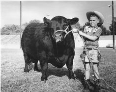 One proud kid: Boy with prize winning bull, 1960.