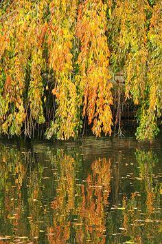 Autumn, Brooklyn Botanic Garden. photo: Hubert Steed.