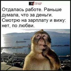 Фотография Funny Animal Jokes, Funny Animals, Funny Jokes, Hilarious, Russian Quotes, Lol So True, Funny Stories, Man Humor, Animals And Pets