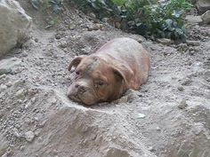 Man rescues dog that was buried alive (6 Photos) : theCHIVE