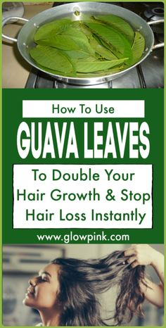 Learn how to use guava leaves to stop hair loss and double hair growth naturally.Learn how to use guava leaves to stop hair loss and double hair growth naturally at home. If you have been suffering from hair loss or slow hair growth and you want th Healthy Hair Growth, Hair Growth Tips, Natural Hair Growth, Natural Hair Styles, Oil For Hair Loss, Anti Hair Loss, Stop Hair Loss, Hair Loss Cure, Natural Hair Treatments