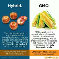 (3) News about #GMO on Twitter