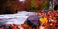 Europe in the fall is stunning! Repin if you're ready for #fall. (Image via: @dakotab24)