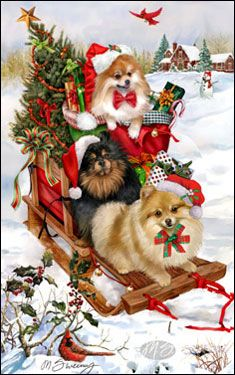 --Pomeranian - Good Tidings and Cheer