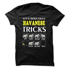 Havanese #ilovemydogs #havanese #havaneseoftheworld #havaneser #havanesepuppy #havanesedog