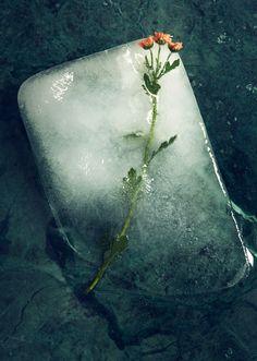 Editorial - Icecubes and flowers - Støy Magazine 1.0