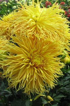 264 Best Yellow Flowers Images Yellow Flowers Color Yellow Yellow