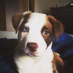 🐶 . cred: @pnwwanderer . #emojisinthewild #emoji #emojis #puppy #puppylove… Puppy Love, Craft Supplies, Puppies, Dogs, Animals, Instagram, Cubs, Animales, Animaux