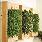 How To Build A Green Wall :: Building Moxie