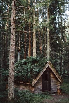 Blog | KRAUTKOPF Yes, yes, a little cabin in the woods is what we need!
